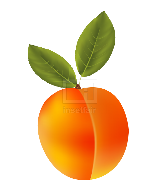 Apricot fruit with green leaves vector illustration png image