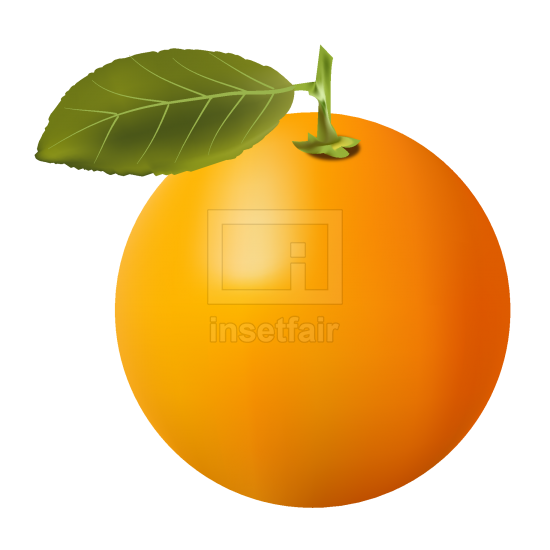 Attractive orange fruit with a leaf vector stock illustration free download