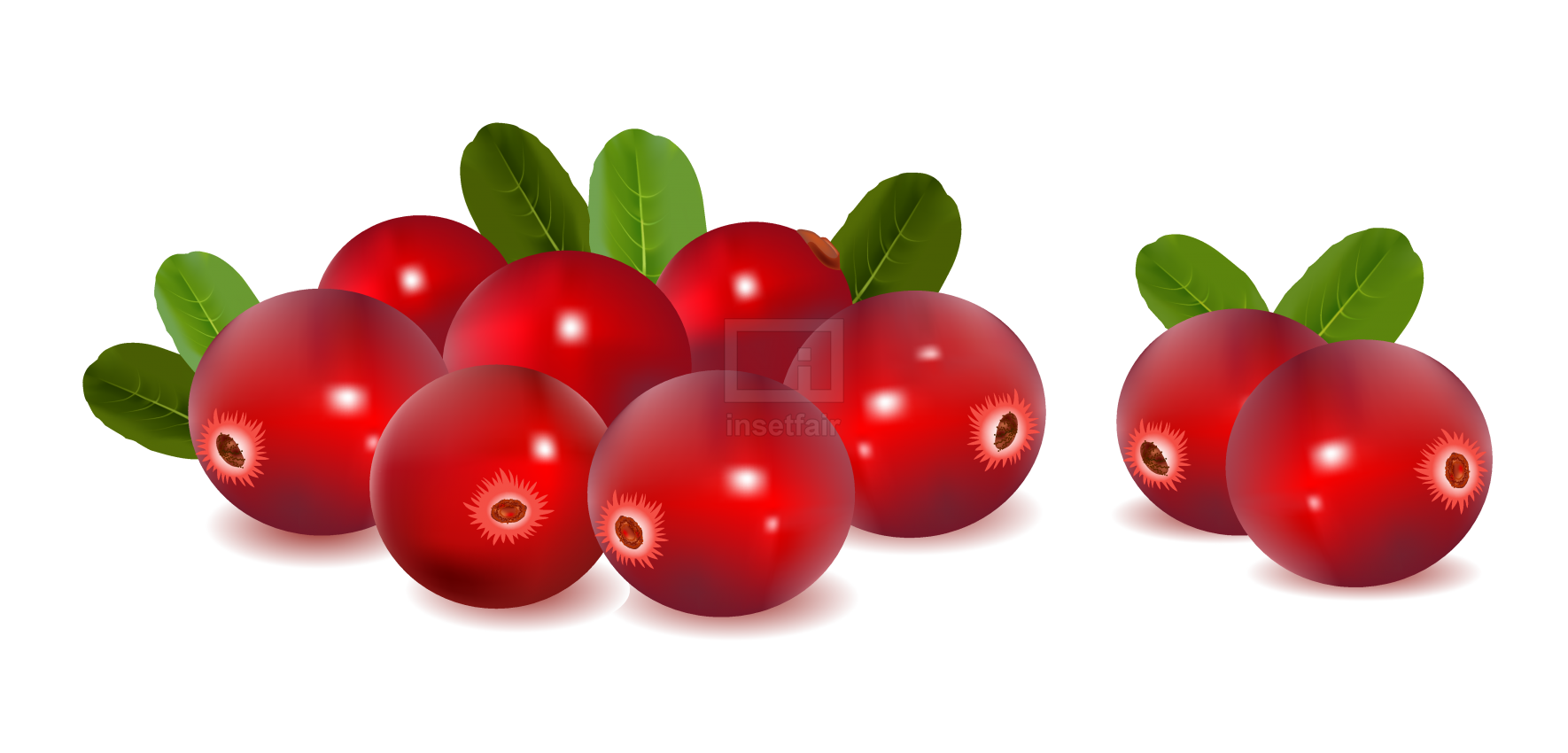 Cranberries fruits realistic vector illustration as png image