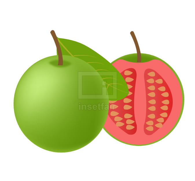 Green goa fruits with red flesh and seeds vector drawing