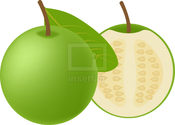 Green goa fruits with white flesh and seeds vector illustration