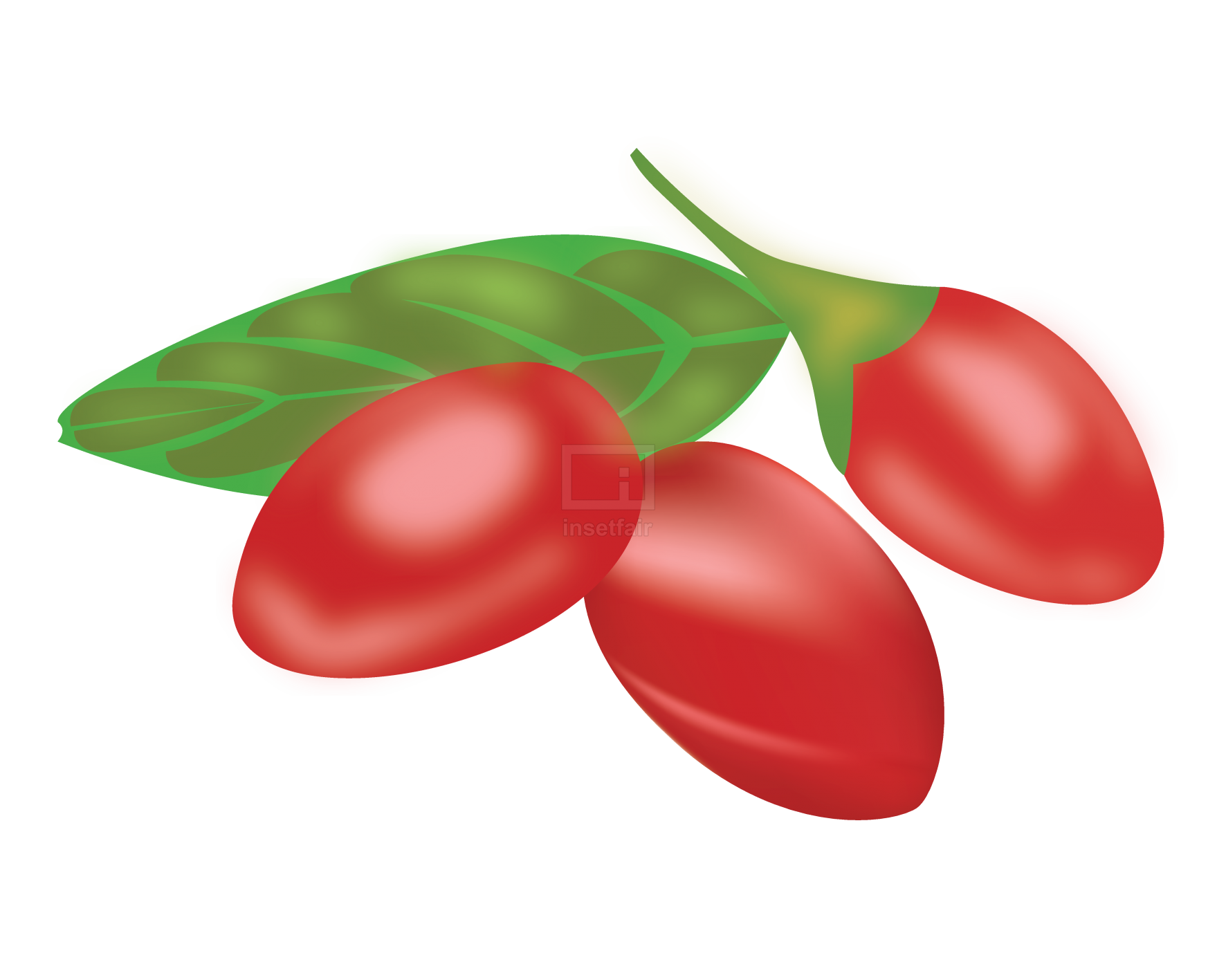 Goji berry fruits free download vector illustration PNG file