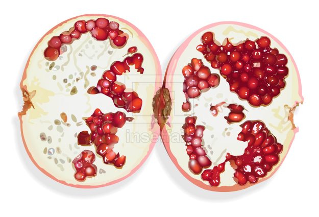 Pomegranate fruit vector drawing fla royalty free png image