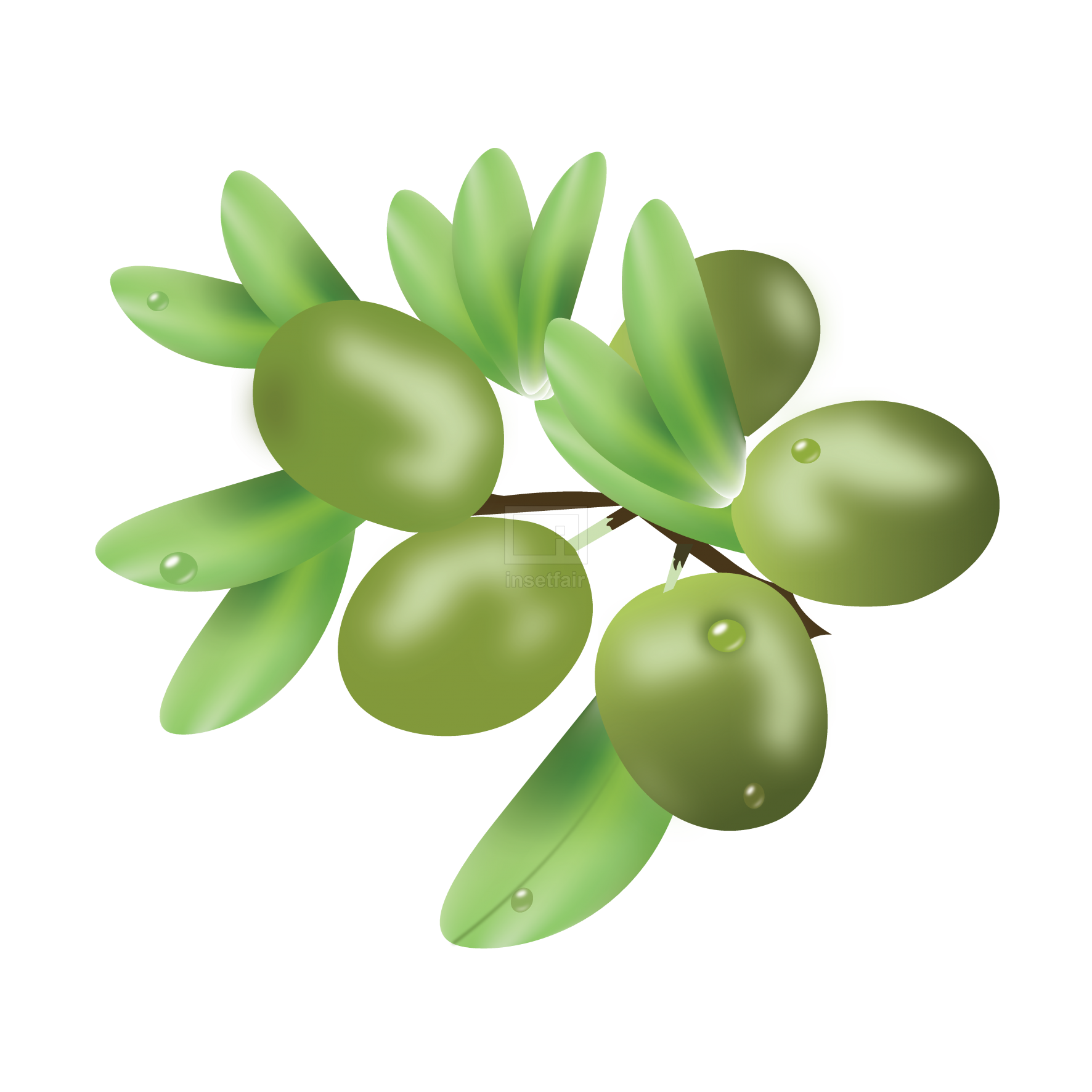 Green olive fruit branch with leaves free vector stock