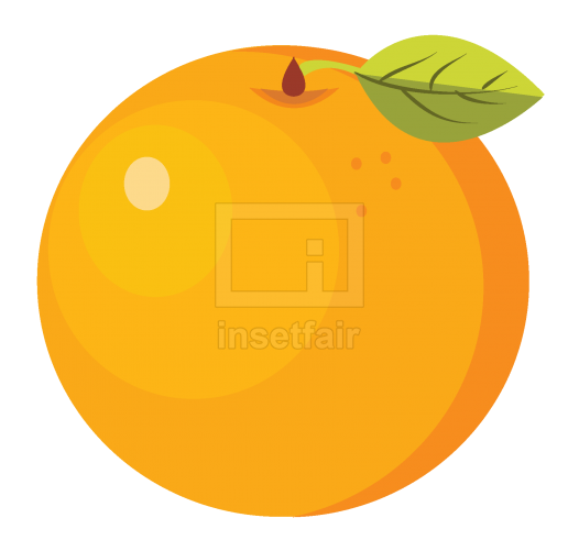 Orange fruit vector illustration free png image