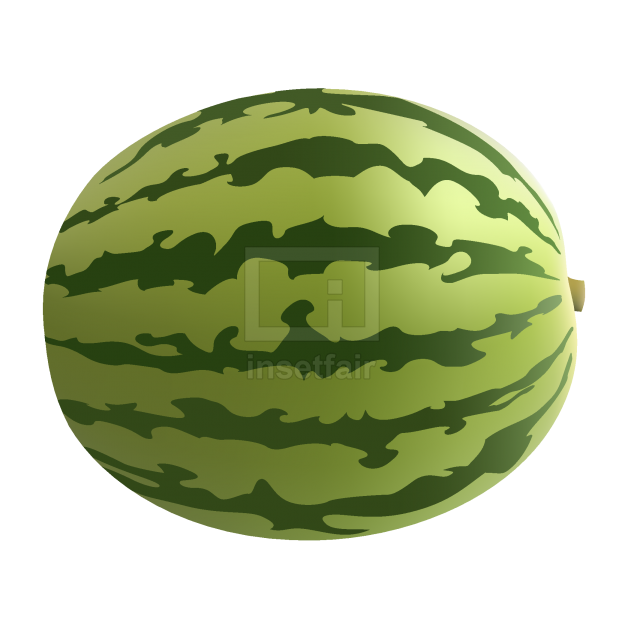 Xigua fruit vector graphics with Adobe Illustrator