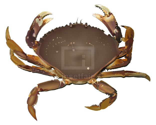 Elevated view of a sea crab with Adobe Flash