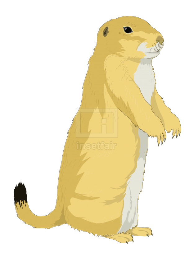 Portrait of a ground squirrel vector illustration free for commercial use
