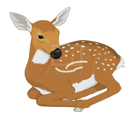 Young Deer sitting position vector png free for commercial use at Insetfair