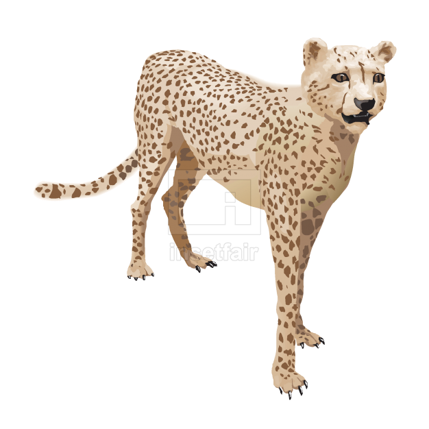 Wild big cat realistic vector illustration of leopard free for commercial use at Insetfair