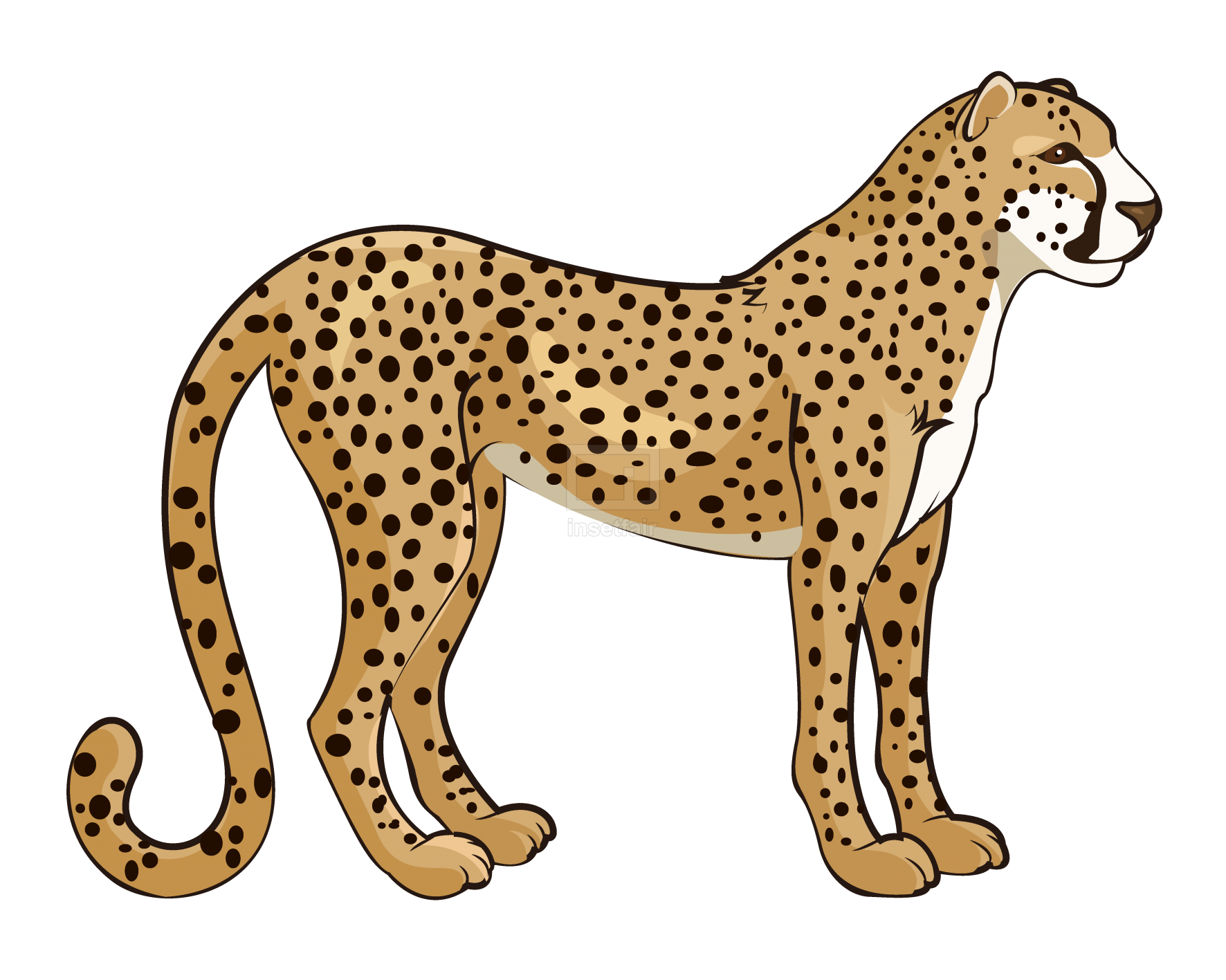 Vector illustration of a cheetah isolated on a white background
