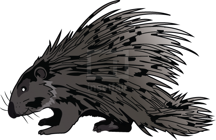 Vector graphics of a Porcupine with long spines on the back