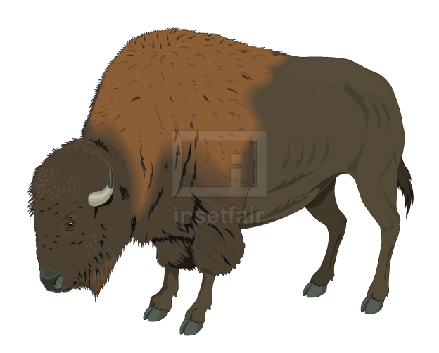 Vector bison for free download in AI format