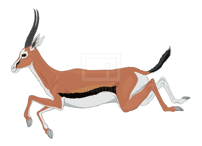Running mature deer vector illustration for free
