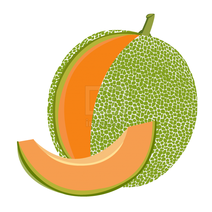 Cantaloupe melon fruit vector drawing free png download