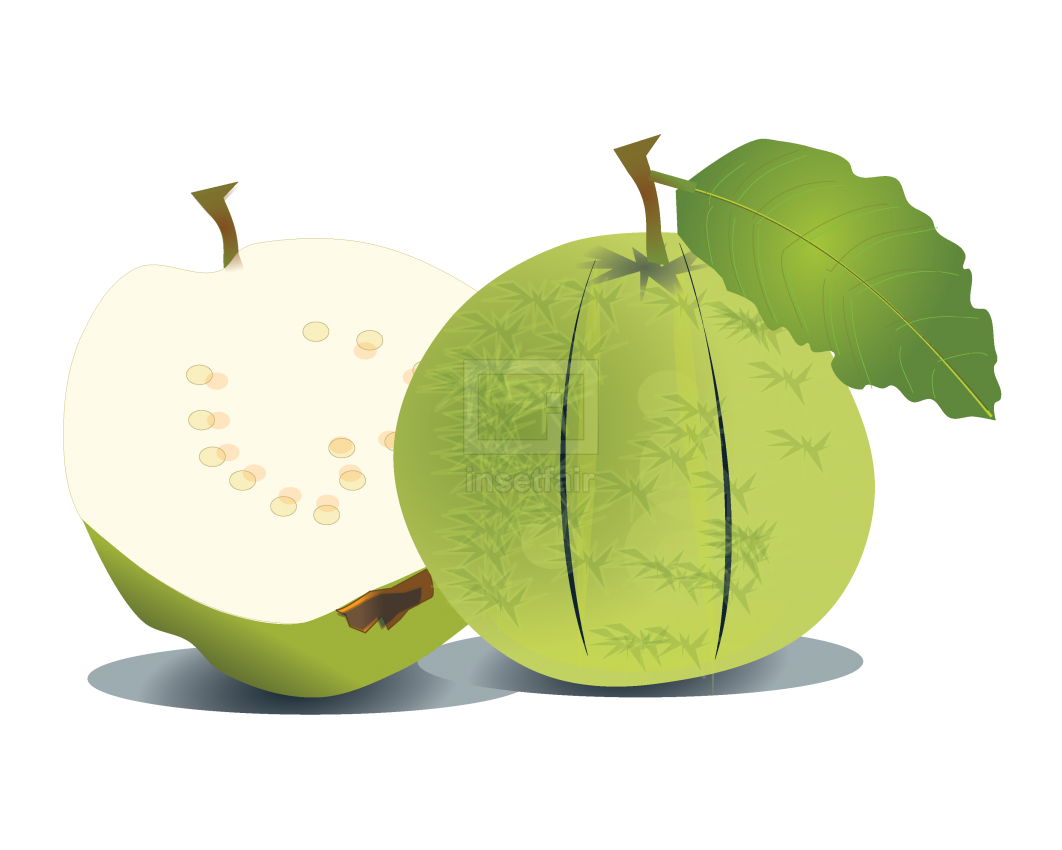Green goa fruit vector drawing royalty free stock png image