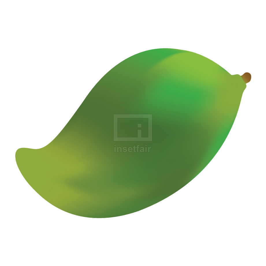 Green mango fruit vector vegetable png stock image