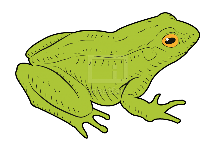 Vector illustration of a sitting green frog with adobe illustrator