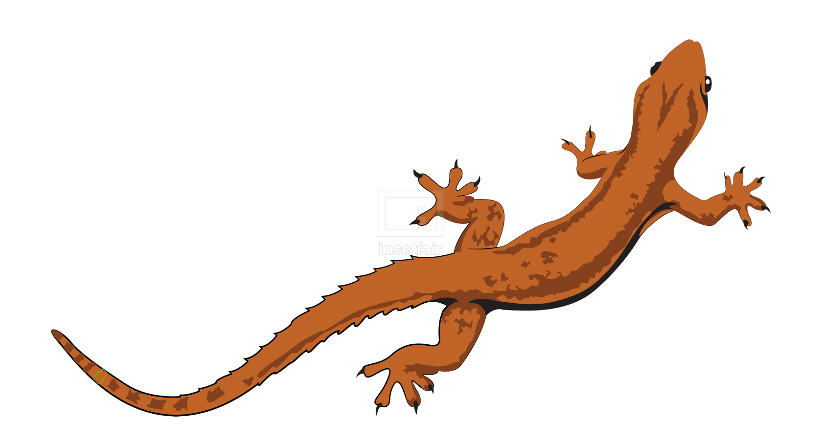 Gecko Lizard vector illustration in jpg and png format
