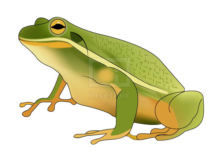 Green Frog Vector Toad Illustration Stock Vector Image