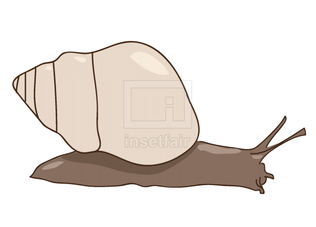 Snail clipart in adobe illustrator
