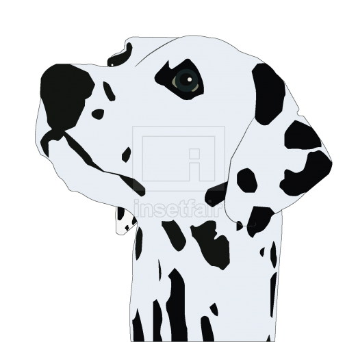 Dalmatian Dog Head vector drawing with adobe illustrator free download png image
