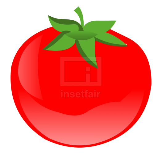 Tomato fruit vector drawing fla royalty free png image