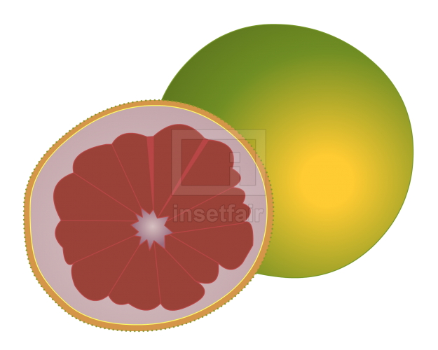 Pomelo fruit vector drawing fla royalty free png image