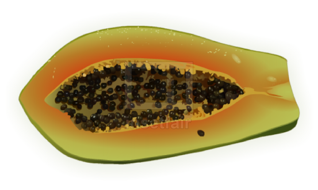 Papaya with seeds fruit vector drawing fla royalty free png image