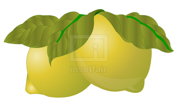 Lime fruits vector drawing fla royalty free png image