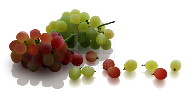 Grapes fruit vector drawing fla royalty free png image