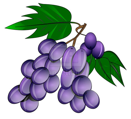 Blue Grape vector drawing fla royalty free png image