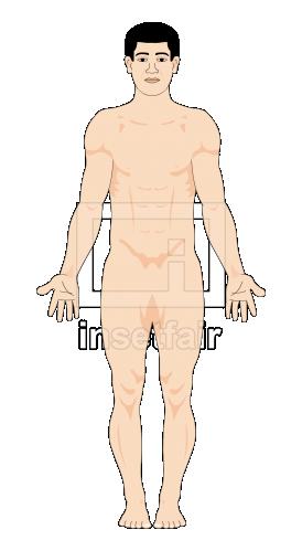Male human body anatomy illustration