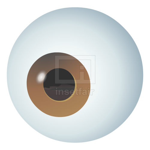 Human eyeball flash graphics as png file