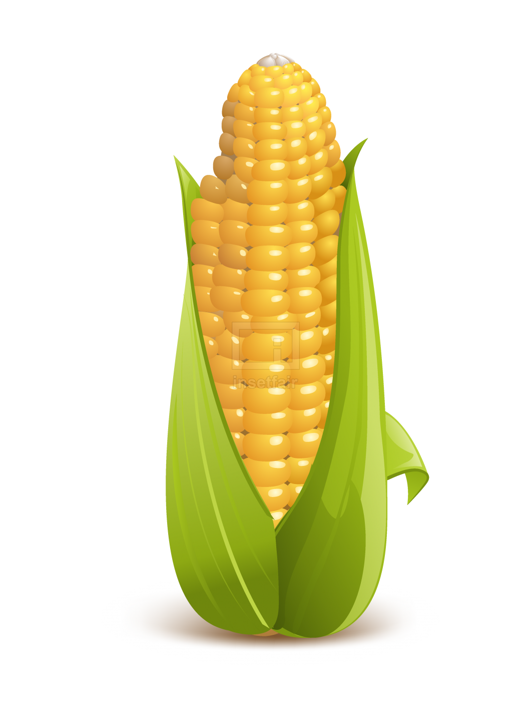 Corn vegetable realistic vector illustration royalty free image