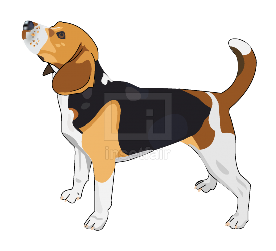 Beagle Dog vector drawing with adobe illustrator free download png image