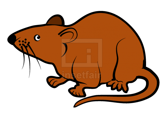 Mice or Rat  vector drawing with adobe illustrator free download png image