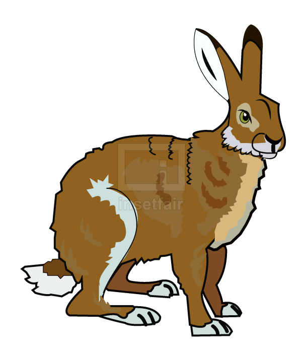 Rabbit vector drawing free download png image at Insetfair