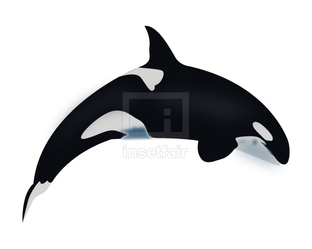 Vector whale drawing royalty free png stock illustration