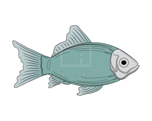 Vector fish clipart illustration royalty free png image