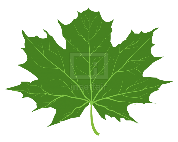 Green maple leaf vector illustration AI source file free download