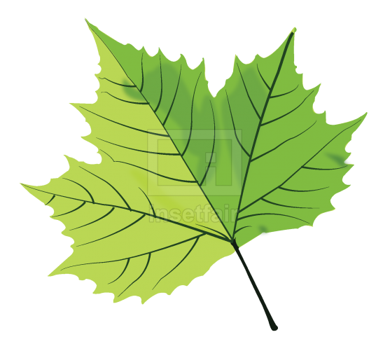 Single green maple leaf vector image with Adobe Illustrator